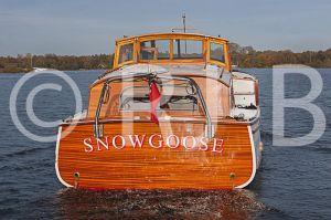 SnowgooseNo-200.jpg