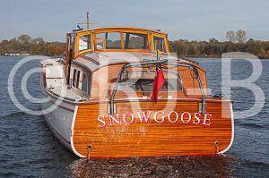 SnowgooseNo-205.jpg