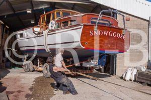 SnowgooseNo-491.jpg