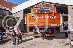 SnowgooseNo-507.jpg