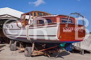SnowgooseNo-511.jpg