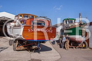 SnowgooseNo-520.jpg
