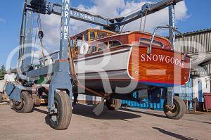 SnowgooseNo-532.jpg