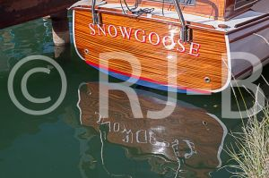 SnowgooseNo-625.jpg