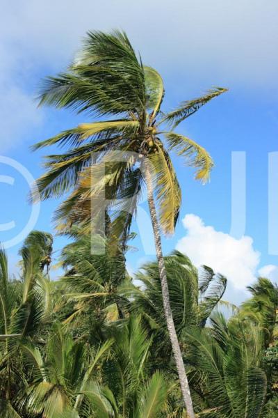 Caribbean0587